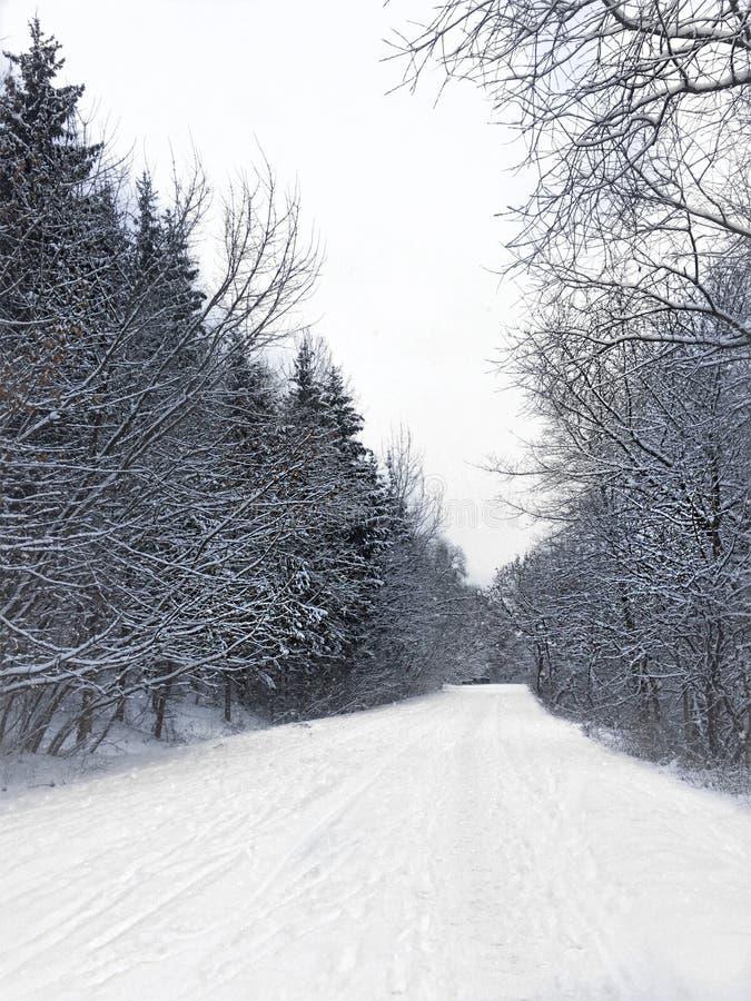 Winterland royalty-vrije stock foto's