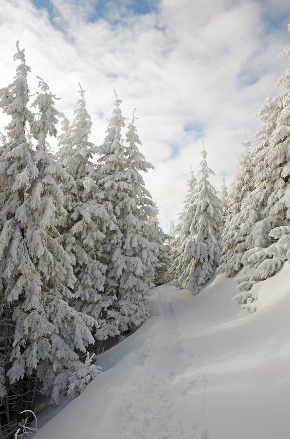 Winterland und -bäume stockbild