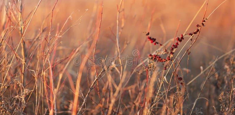 Winterlandgras lizenzfreie stockfotografie