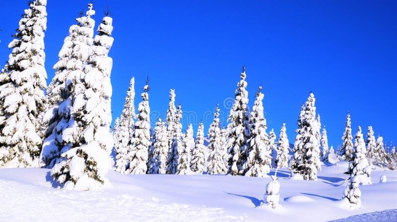 Winterlandscape zdjęcie stock