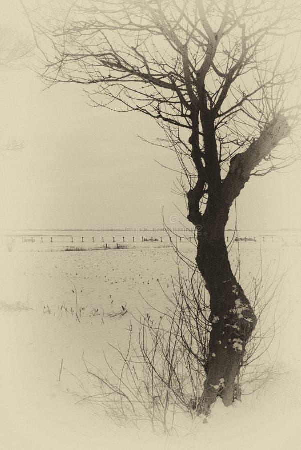 Winterlandscape stock photography