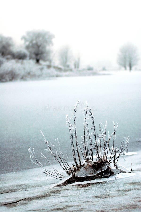 Winterlandscape am Flussufer stockbild