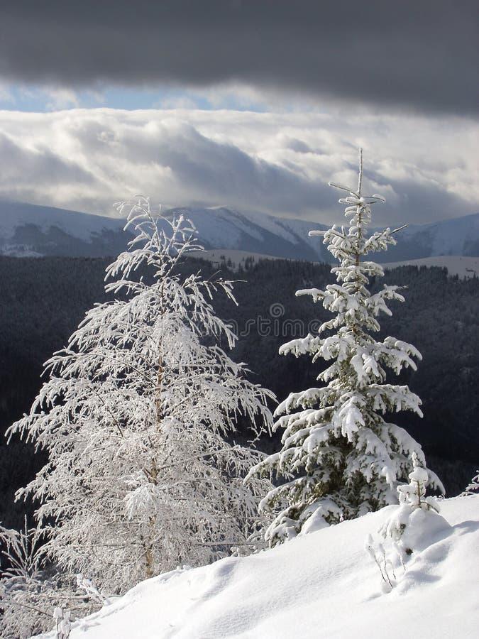 Winterlandschaft 2 (Vertikale) lizenzfreie stockfotografie