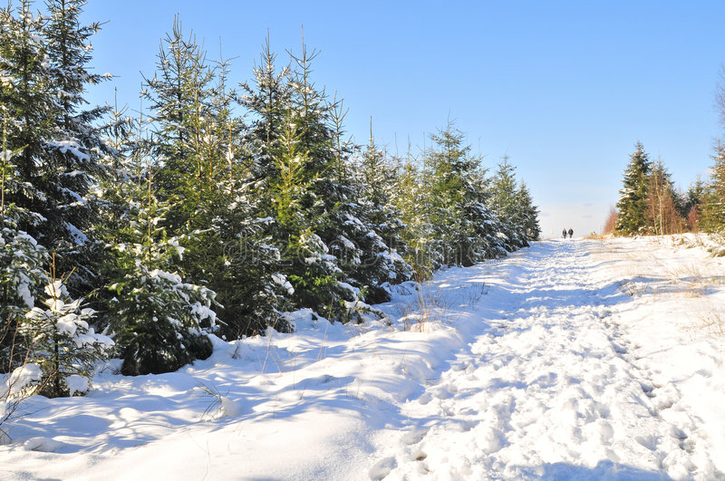 Winterlandschaft in Ardennes stockbild