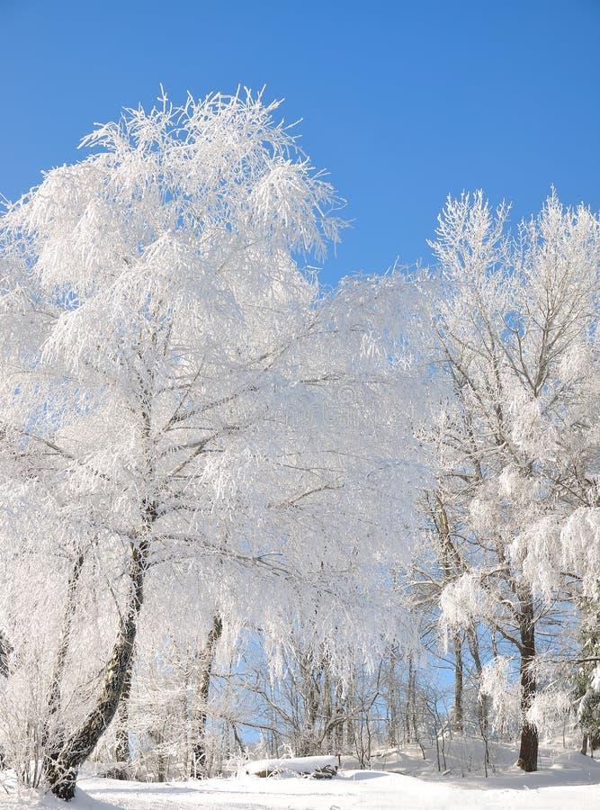 Winterlandschaft, Bayerischer Wald, Deutschland stockfoto