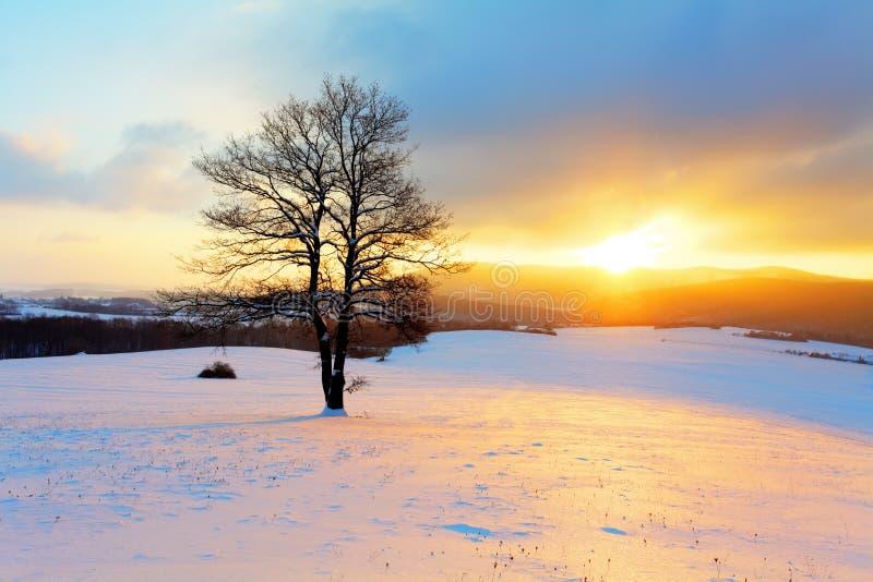 Winterlandschaft in der Schneenatur mit Sonne und Baum stockfotografie
