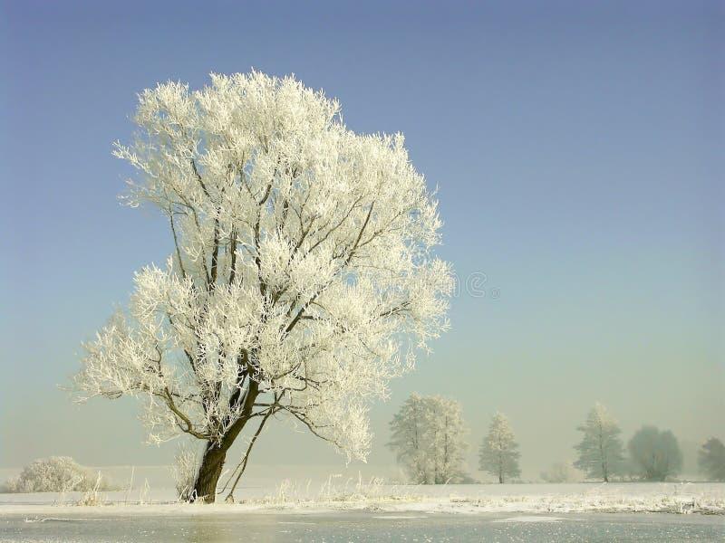 Winterlandschaft, Frost deckte Bäume ab lizenzfreie stockfotos