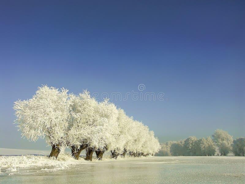 Winterlandschaft, Frost deckte die Bäume ab lizenzfreie stockfotografie