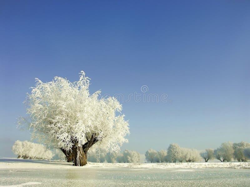 Winterlandschaft, Frost deckte die Bäume ab lizenzfreies stockfoto