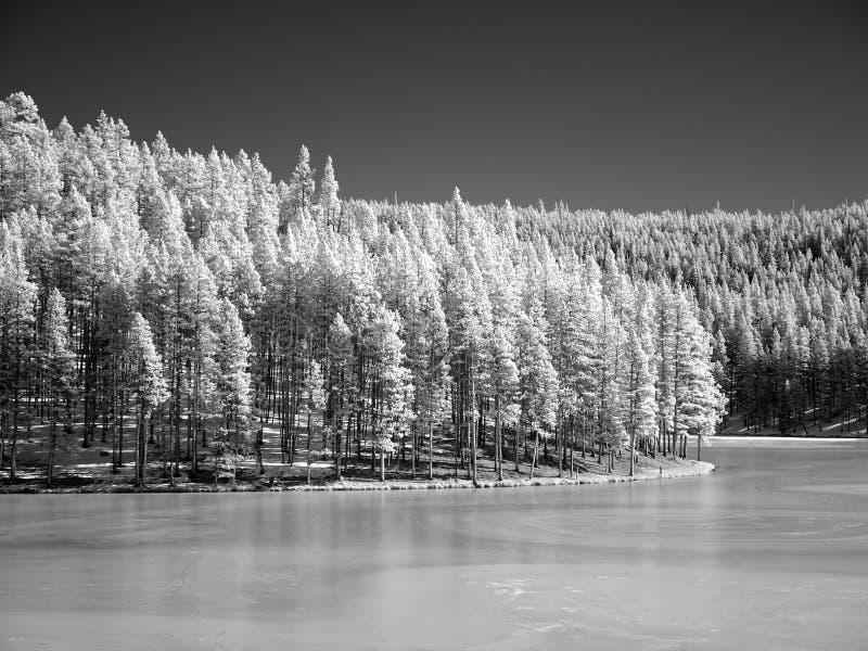 Winterlandschaft im Infrarot stockfotos