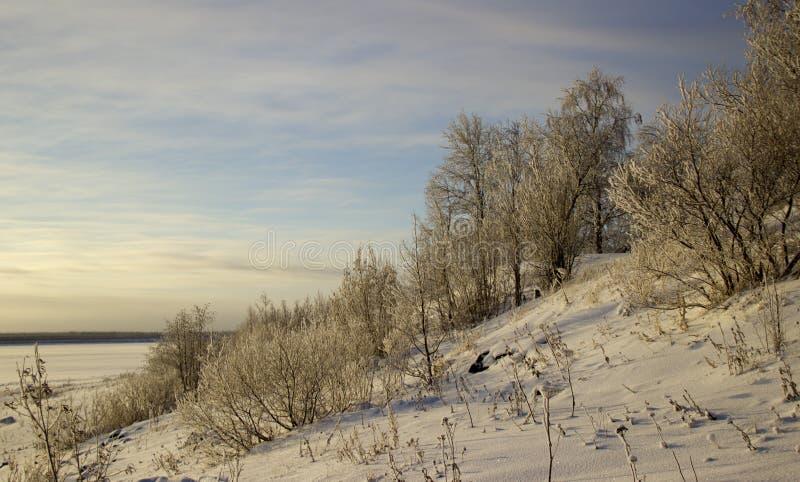 Winterlandschaft mit Bäumen stockfotografie