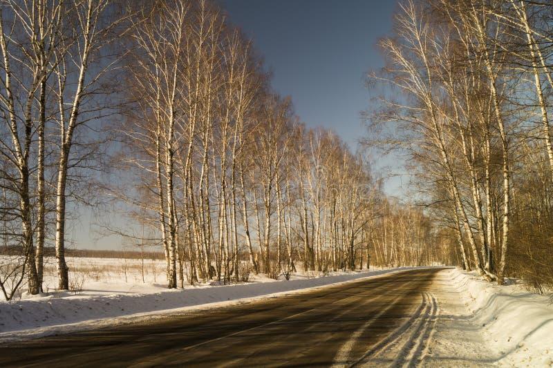 Winterlandschaft mit Birke durch Waldung lizenzfreie stockbilder