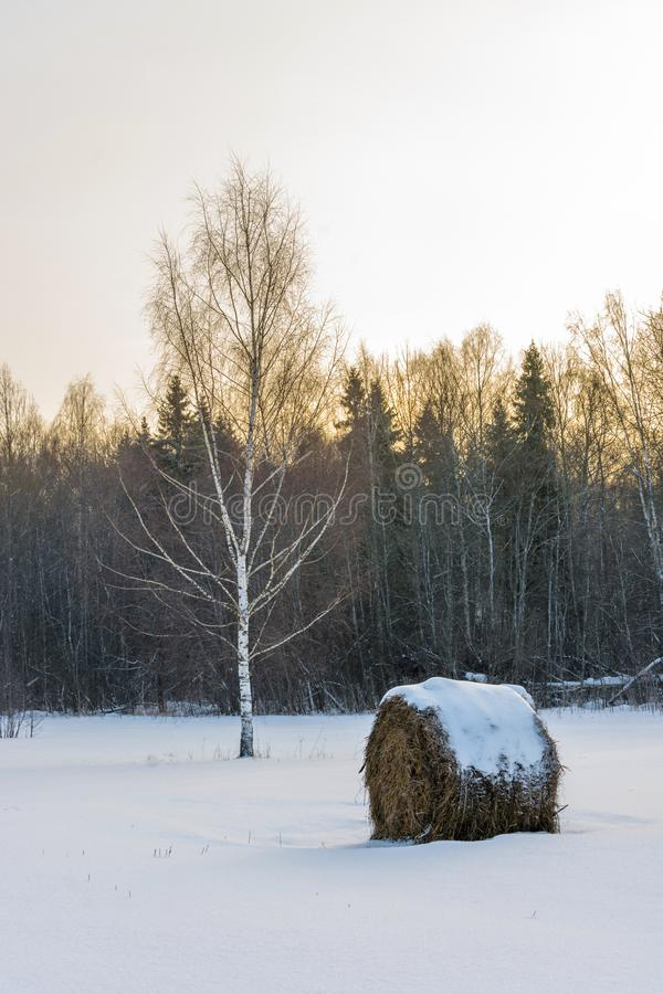 Winterlandschaft mit Birken und Heuschobern lizenzfreie stockbilder