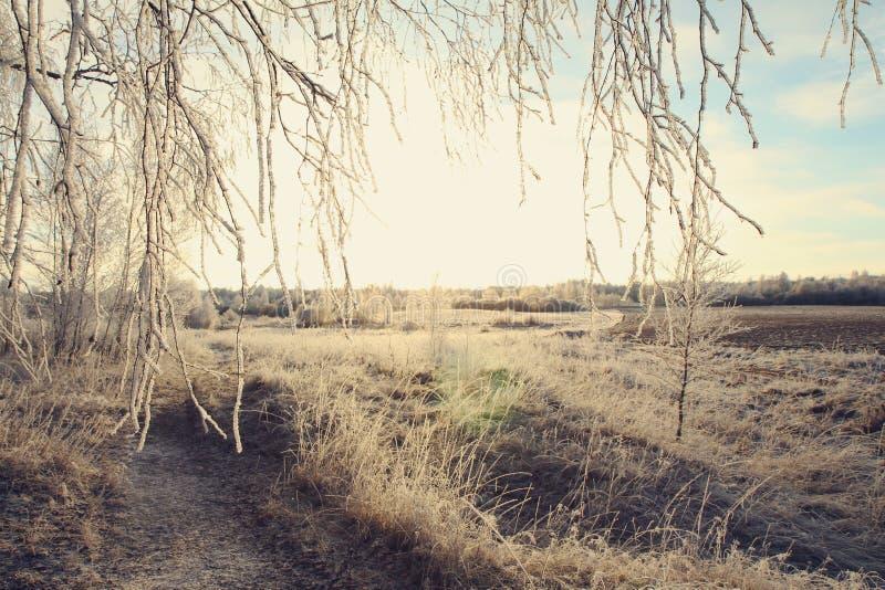Winterlandschaft mit Birkenzweigen lizenzfreie stockbilder