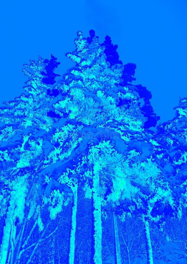 Winterlandschaft mit hellen blauen Farben Baum- und Weihnachtsbäume bedeckt mit Schnee stock abbildung