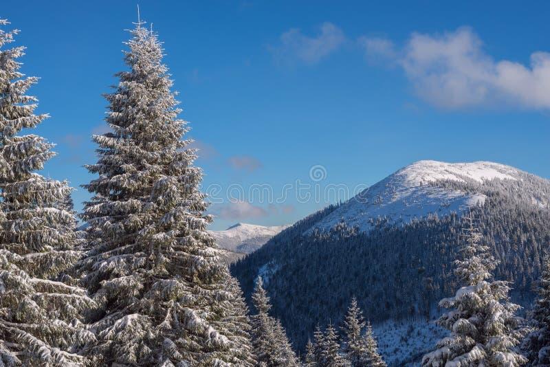 Winterlandschaft mit Schnee bedeckte Kiefer und Berge auf t stockfotos