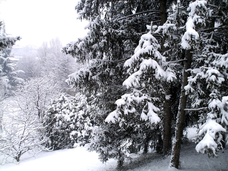 Winterlandschaft mit schneebedeckten Bäumen lizenzfreies stockbild