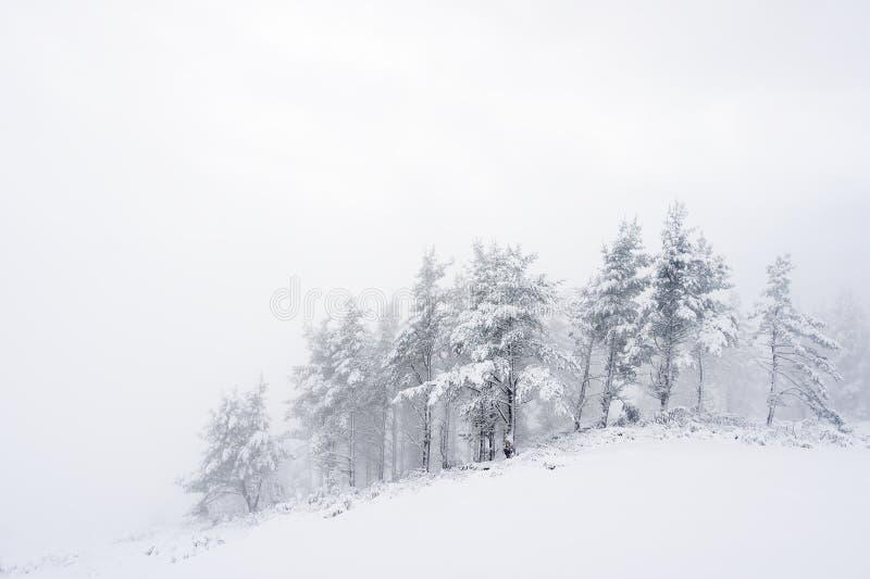 Winterlandschaft mit schneebedeckten Bäumen stockfoto