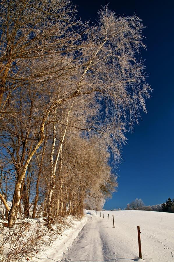 Winterlandschaft mit Weg und Birke lizenzfreies stockbild