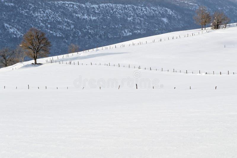 Winterlandschaft von Bäumen und von weißen Feldern stockfotografie