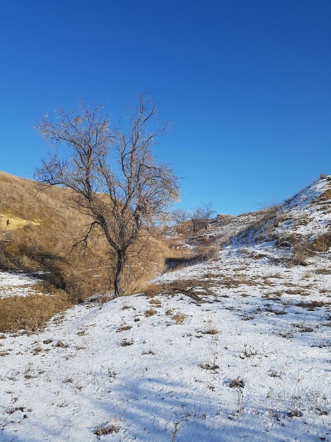Winterlandschaft von bloßen Hügeln und von einsamen Baum lizenzfreie stockfotografie
