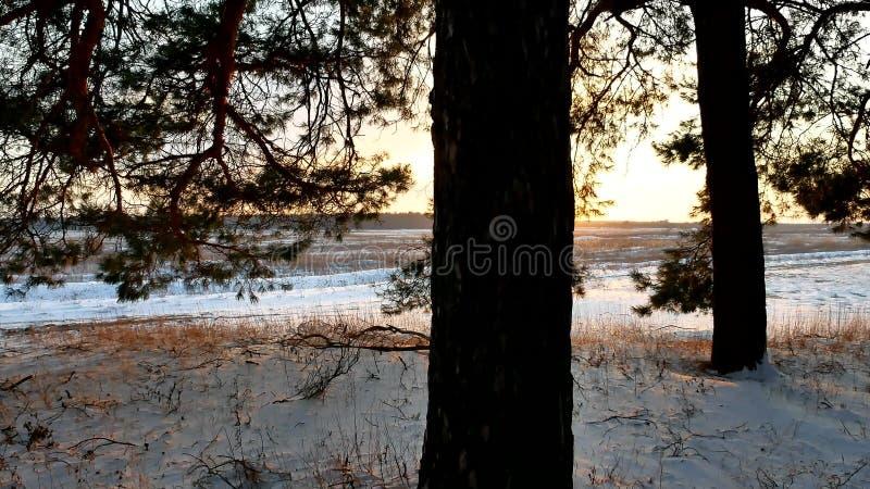 Winterlandschaftssonnenuntergang im Wald, fabelhafter Kiefernwald, Weihnachtsbaumnatur lizenzfreies stockfoto