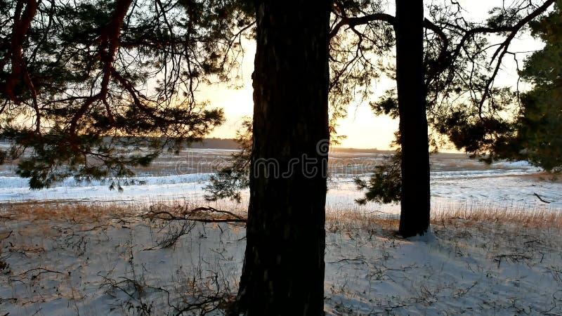Winterlandschaftssonnenuntergang im Wald, fabelhafter Kiefernwald, Weihnachtsnaturbaum lizenzfreie stockbilder