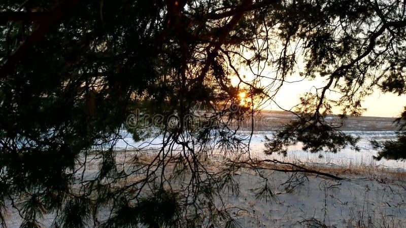 Winterlandschaftssonnenuntergang im Wald, fabelhafter Kiefernwald, Weihnachtsnaturbaum lizenzfreies stockbild