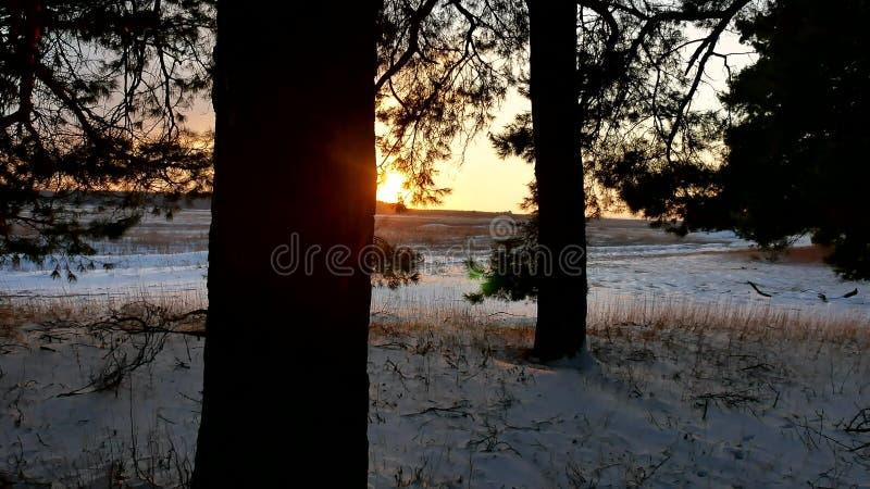 Winterlandschaftssonnenuntergang im Wald, fabelhafter Naturkiefernwald, Weihnachtsbaum lizenzfreies stockfoto