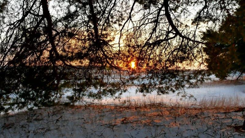 Winterlandschaftssonnenuntergangwald, fabelhafter Kiefernnaturwald, Weihnachtsbaum lizenzfreies stockbild