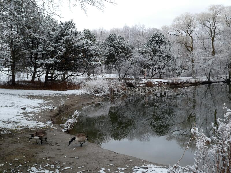 Winterlandschap stock fotografie