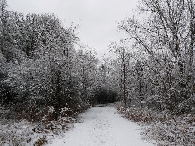 Winterlandschap royalty-vrije stock foto