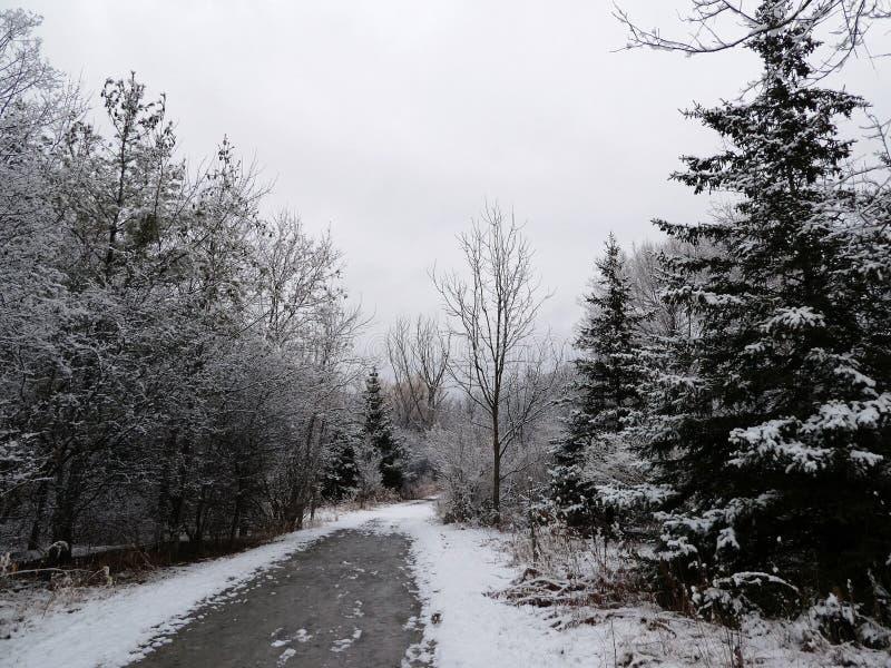 Winterlandschap royalty-vrije stock afbeeldingen