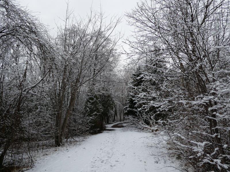 Winterlandschap stock afbeelding