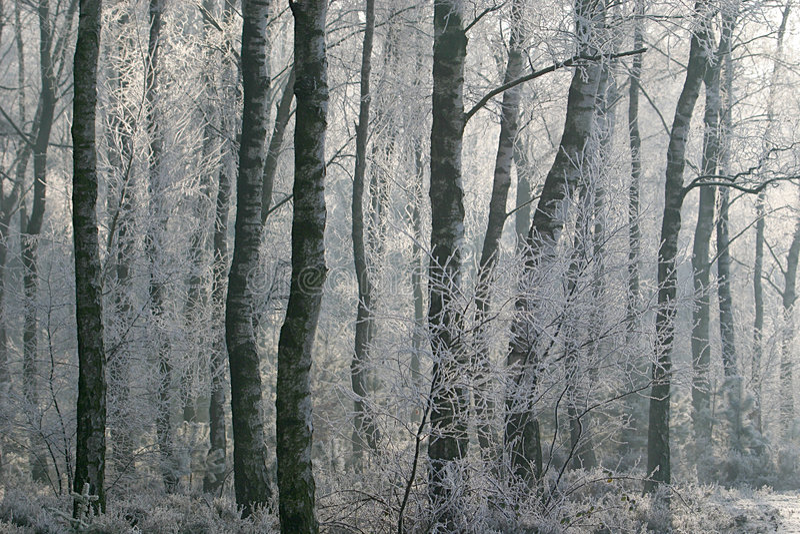 Winterliche Szene: Hoarfrost im Wald stockbilder