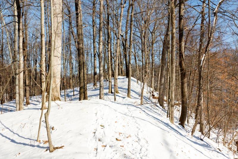 Winterlijn in het bos met sneeuw en kale bomen stock afbeeldingen