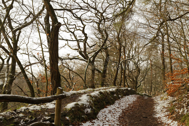 Winterly forest. Snow in a winterly forest royalty free stock photo
