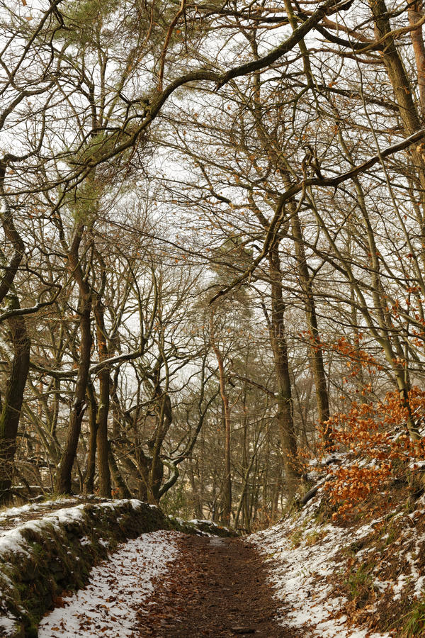 Winterly forest. Snow in a winterly forest royalty free stock image