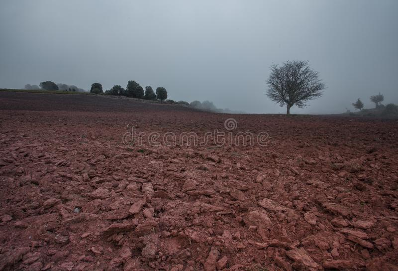 Mediterranean farmland with tree and cloudscape. A winterly view of a ploughed field in the Mediterranean area with a lonely tree under a misty and threatening stock photo
