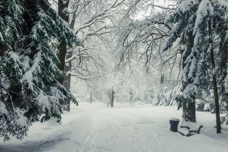 Wintermärchen in einem schneebedeckten weißen Wald stockfotos