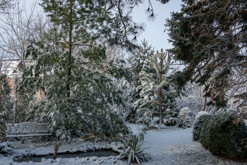 Wintermärchen im Garten Auf dem links ist ein Teich mit Bank und Kiefer Pinus strobus Auf der rechten Reihe des Buchsbaumes unter stockfotografie