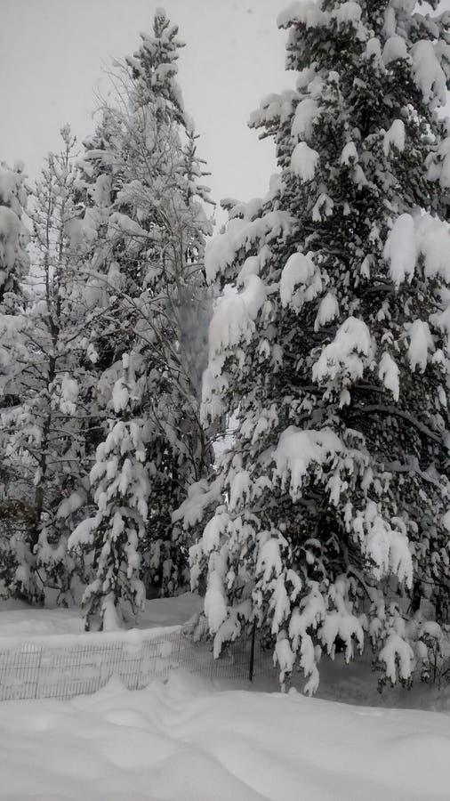 Wintermärchenland lizenzfreies stockfoto