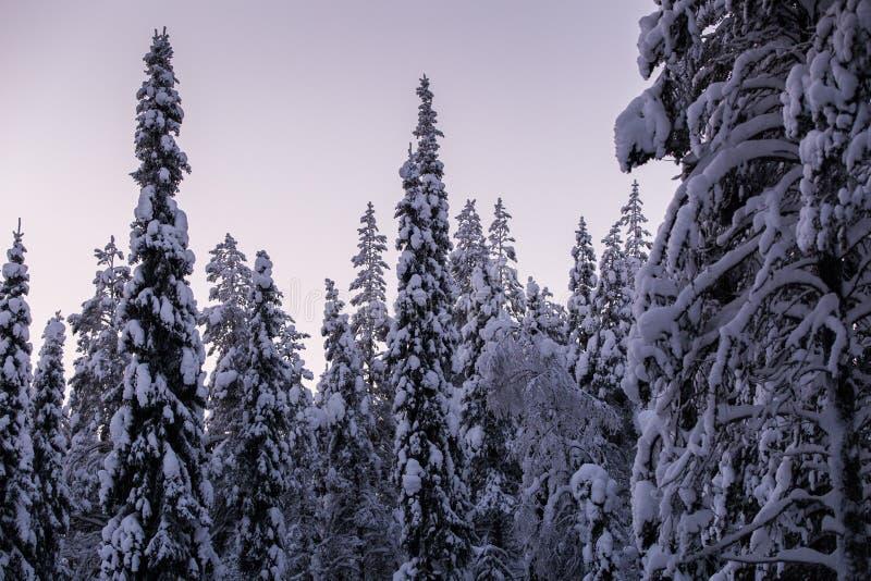Wintermärchenland in Lappland Finnland lizenzfreies stockbild