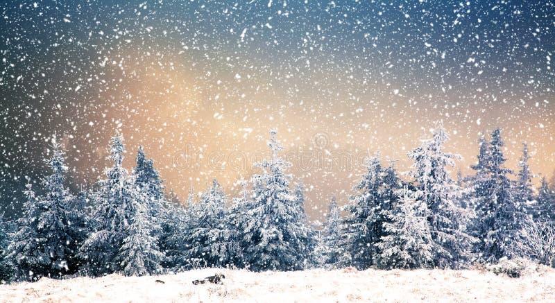 Wintermärchenland - Weihnachtshintergrund mit schneebedeckten Tannenbäumen herein lizenzfreies stockfoto