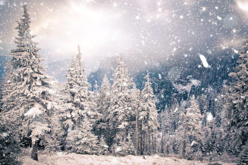 Wintermärchenland - Weihnachtshintergrund mit schneebedeckten Tannenbäumen herein lizenzfreie stockfotografie