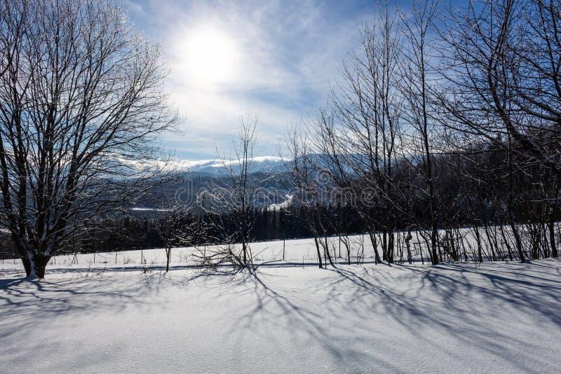 Wintermärchenlandhintergrund Eisiger sonniger Tag Gebirgs-in gezierten Wald-Snowy-Bäumen und im blauen Himmel lizenzfreies stockbild