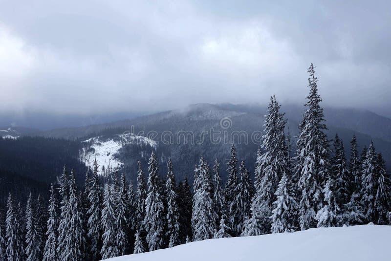 Wintermood arkivbild