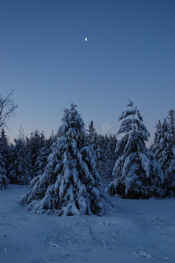 Wintermorgen stockfotografie