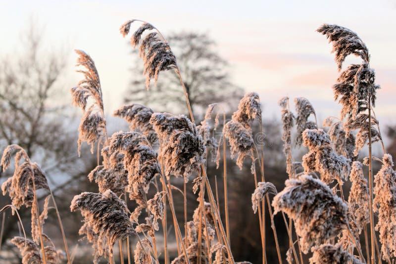 Wintermorgen. stockbild