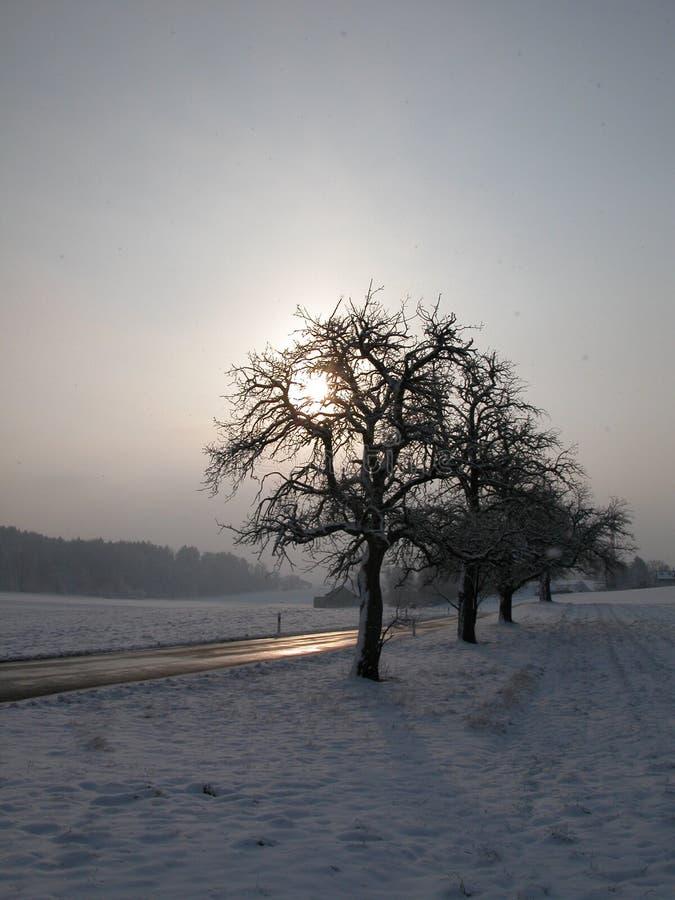 Wintermorgen lizenzfreies stockbild